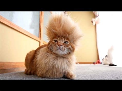 Super funny videos   CATS you will remember and LAUGH all ...