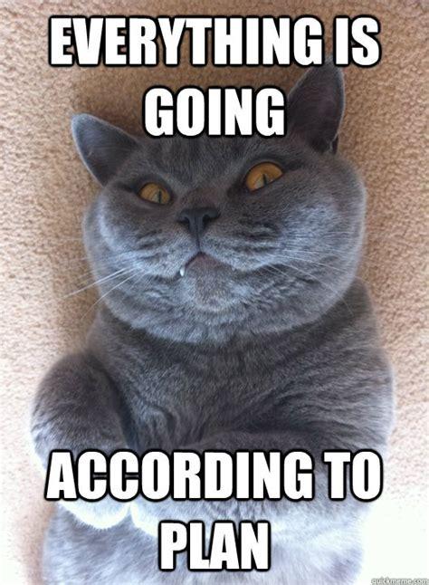 The Best Damn Cat Memes On The Internet   CraveOnline