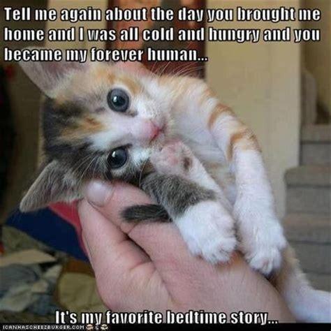 the cutest kitten ever   Dump A Day