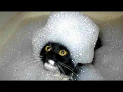 The funniest and most humorous cat videos ever! – 1Funny.com