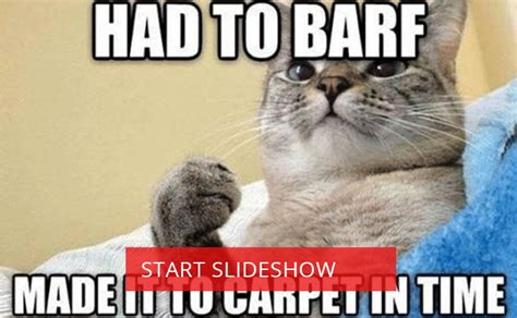 The Funniest Cat Memes You've Ever Seen   Upptrend