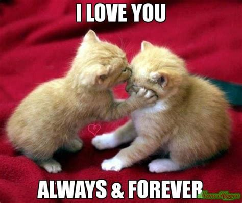 The gallery for   > I Love You Cat Memes For Him