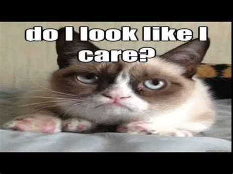 The Grumpy Cat Meme | Funniest The Grumpy Cat Meme ...