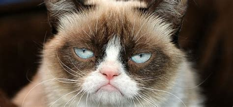 The Grumpy Cat Movie Trailer is the Best Worst Thing You ...