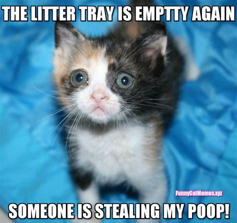 The Litter Tray Is Empty Again!   Funny Kitten MEME