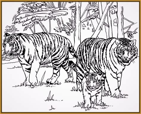Tigres para Dibujar Faciles para Dibujar a Lapiz | Fotos ...