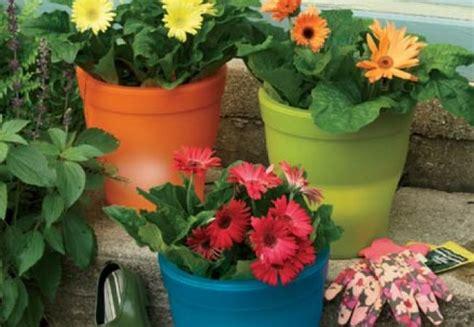 Tipuri de ghivece pentru plantele de interior