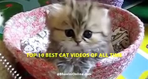 Top 10 Best Cat Videos Of All Time | BhaviniOnline.com