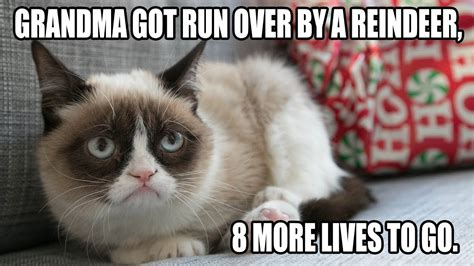 Top 10 Funny Cat Pictures with Captions   Funny Cat Memes ...