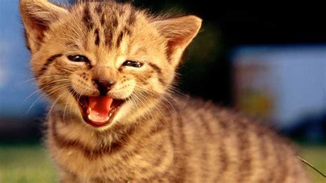 Top 10 Funny Cat Videos Compilation  Part 2  + Bonus Cat ...