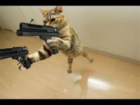 Top 10 funny cat videos