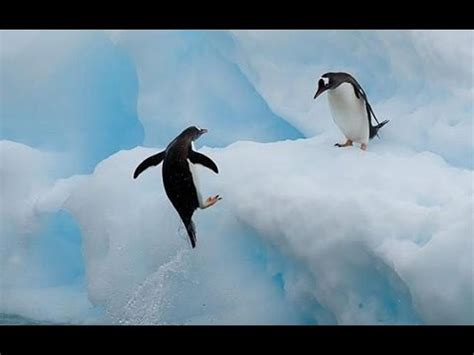 Top 10 Most Funny Penguin Videos  2015    YouTube