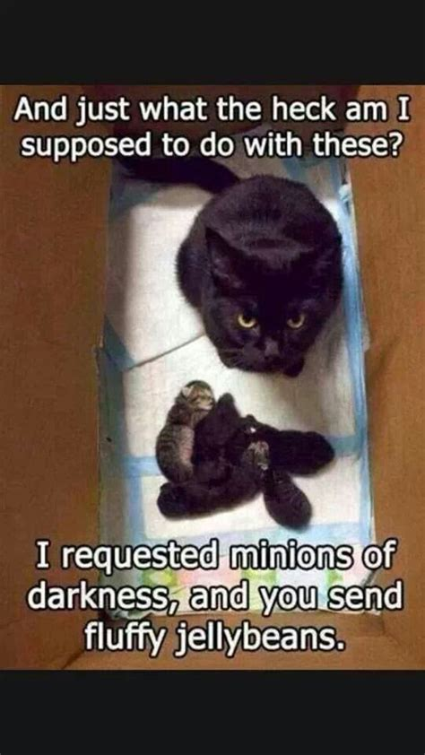Top 30 Funny Cat Memes – Quotes Reviews