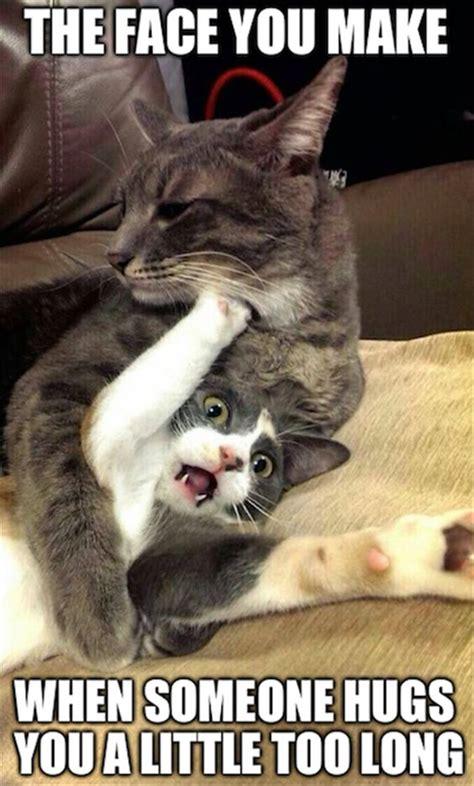 Top 35 Most funniest Animal Memes | Finest 10 Ideas