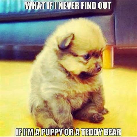 TOP 79 Funny and Cute Puppies Memes   Funny Dog   DomPict.com