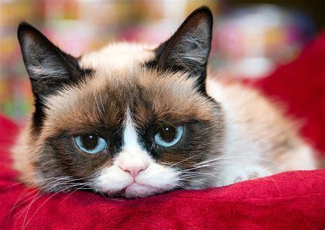 UD: Jadi jutawan kerana  Grumpy Cat