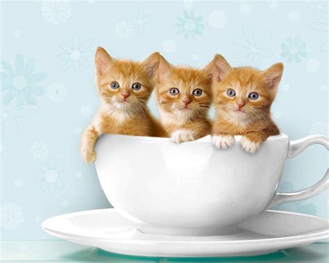 Unique Wallpaper: Funny Cats Ever