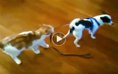 Very funny dog videos & cat videos top10 viral collection