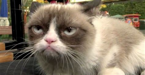 Video: Grumpy Cat meets Grumpy dwarf at Disneyland in ...