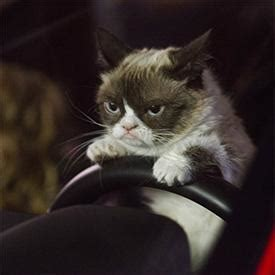 Video:  Grumpy Cat  Movie Gets First Trailer | News ...