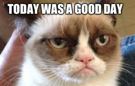 VIDEO. Grumpy Cat: On a  presque  fait la «Grump interview ...