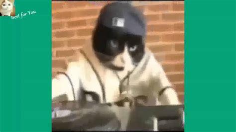 Vídeos de Risa Animales   Videos de Gatos de Risa ...