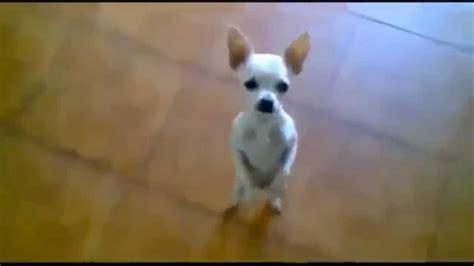 videos de risa de perros 2017 | Videos de risa de animales ...