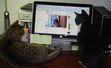 Videos For Your Cat  Allows Cats To Watch YouTube, Too