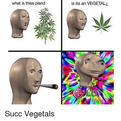 What Is Thiss Pland Is Its an VEGETA S s G   Vegeta Meme ...
