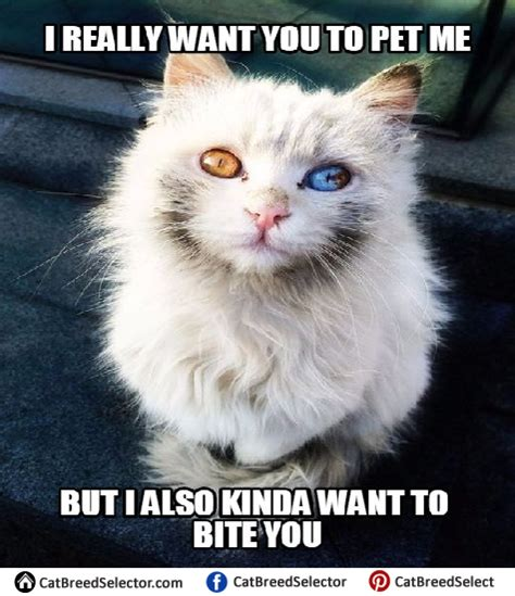 White Cat Memes | Cat Breed Selector
