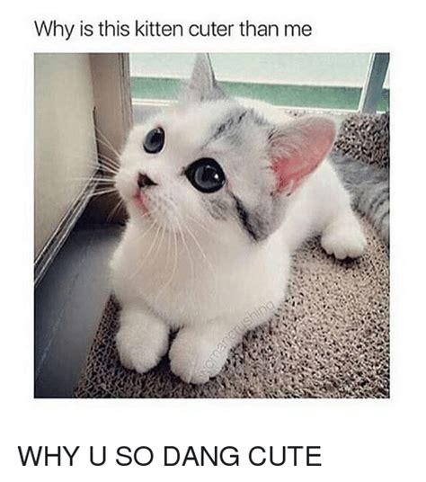 Why Is This Kitten Cuter Than Me WHY U SO DANG CUTE | Cute ...