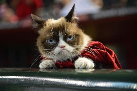 Why You ll Love the  Tard the Grumpy Cat  Meme