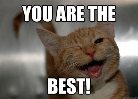 You are the Best!   Sarcastic Cat   quickmeme