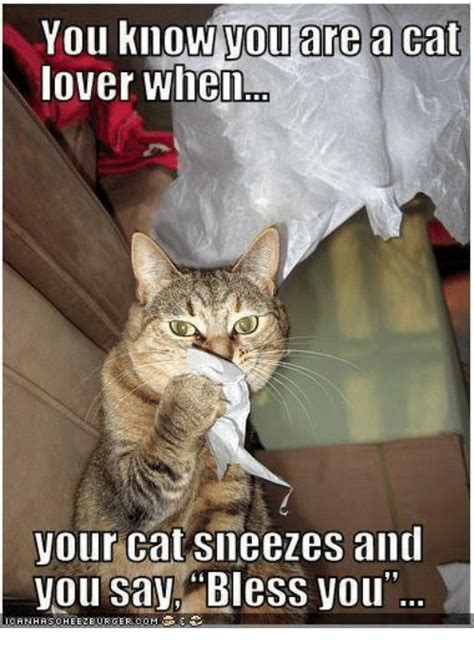 You Know You Are a Cat Lover When Your Cat Sneezes and You ...
