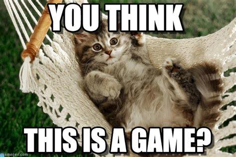 You Think   Cute Hammock Kitten meme en Memegen